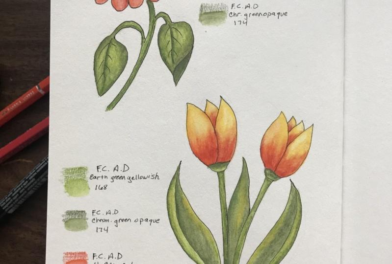 Coneflower and tulips