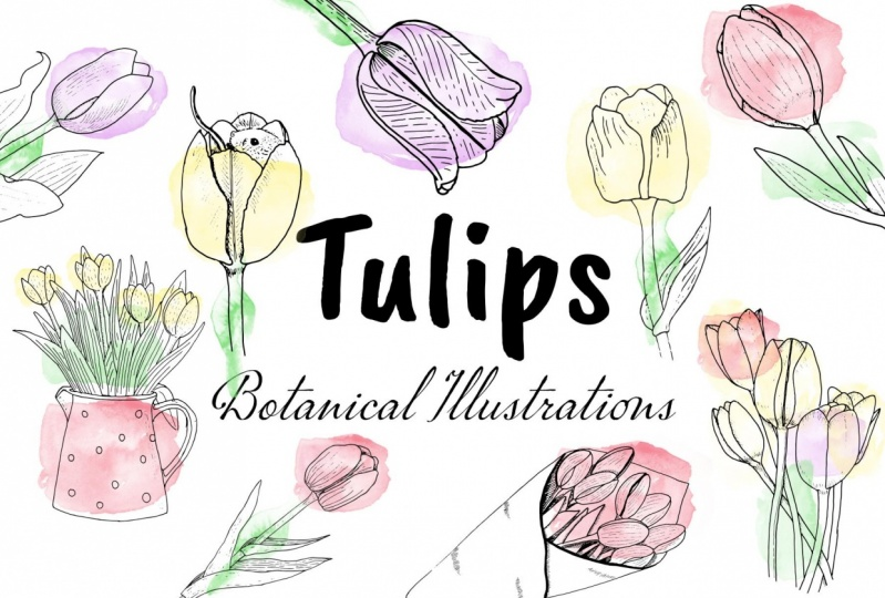 Tulip Illustrations