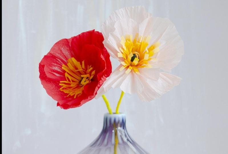 Poppy's from the tropics