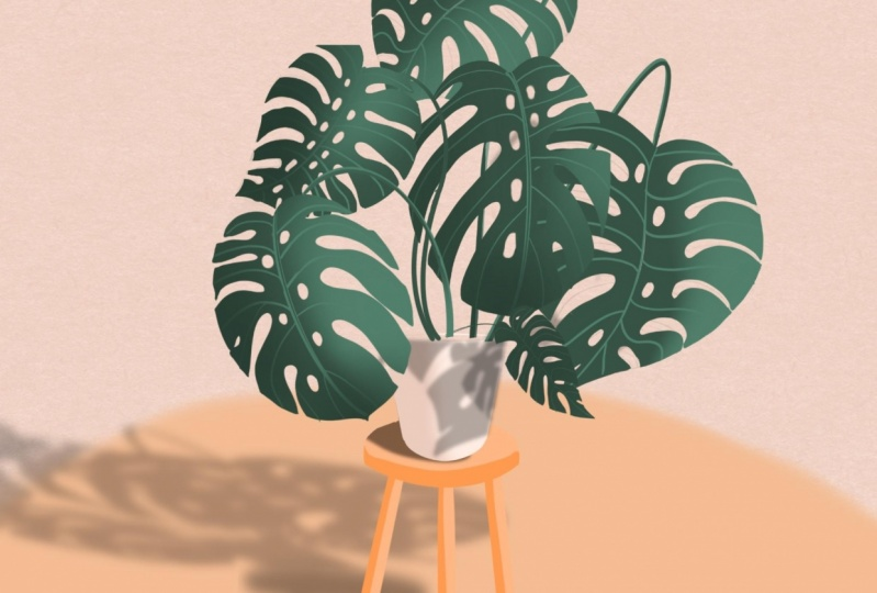 Monstera and Shed