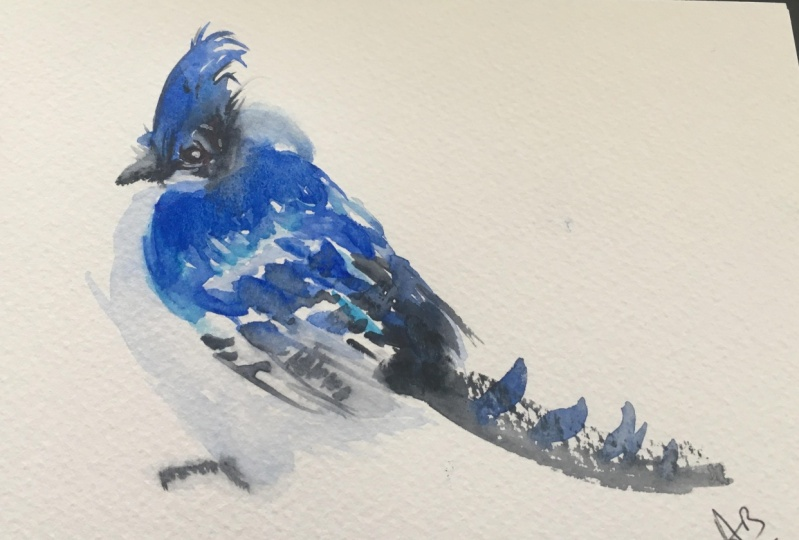 Not so Blue Jay