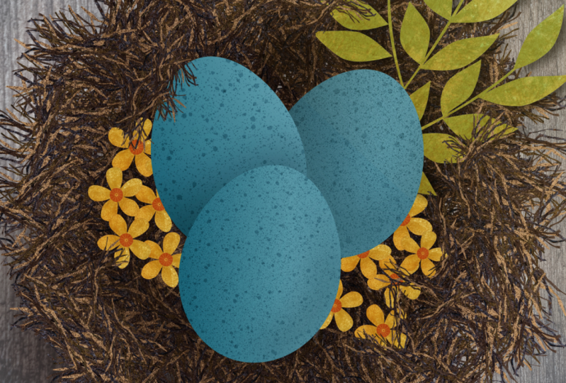Create a nest with Affinity Designer