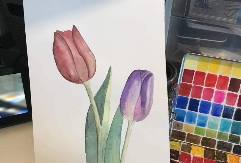 Basic tulips