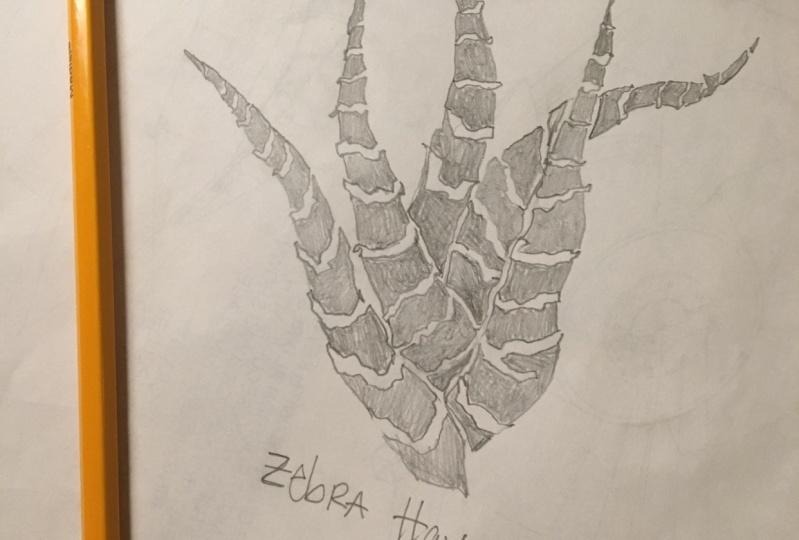 Zebra Haworthia for Blockprinting