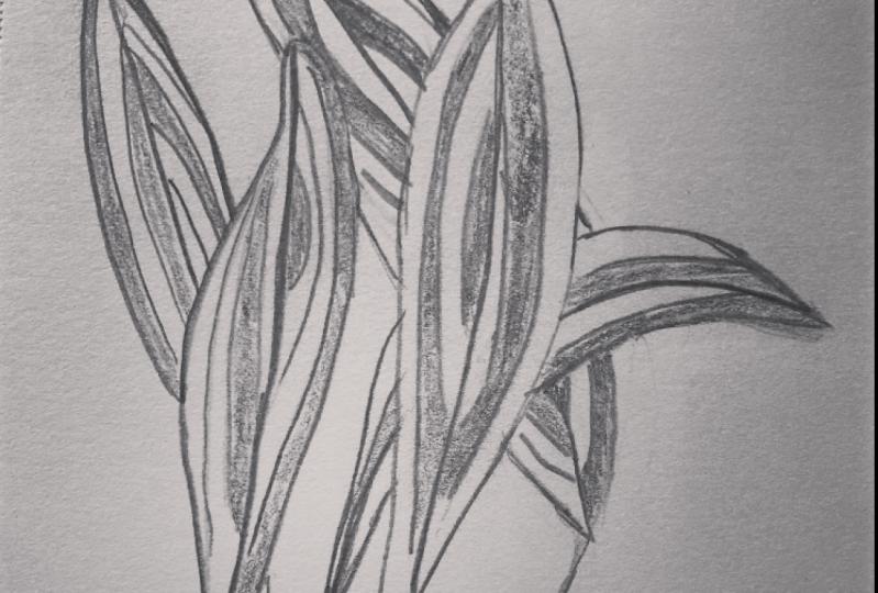 striated houseplant sketch