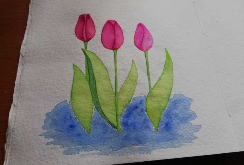 Pink tulips with a splash