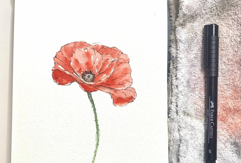 Watercolor and ink Wildflowers - Poppies