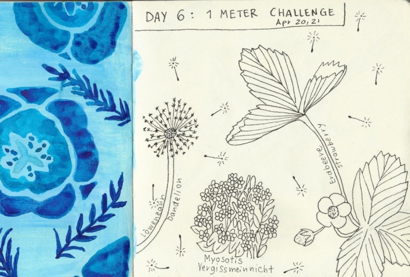Urban Nature Journaling: 7 Days of Artistic Prompts