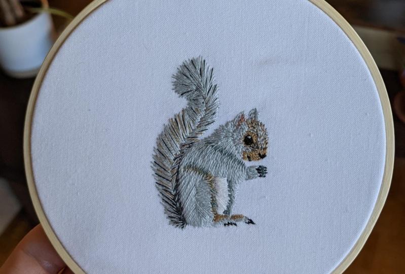 Gray squirrel!
