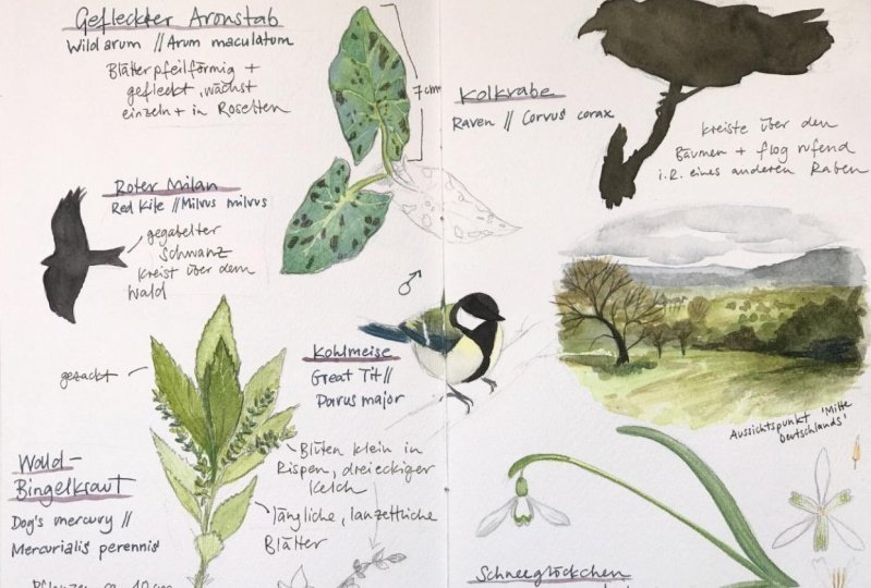 Nature Sketching Compositions