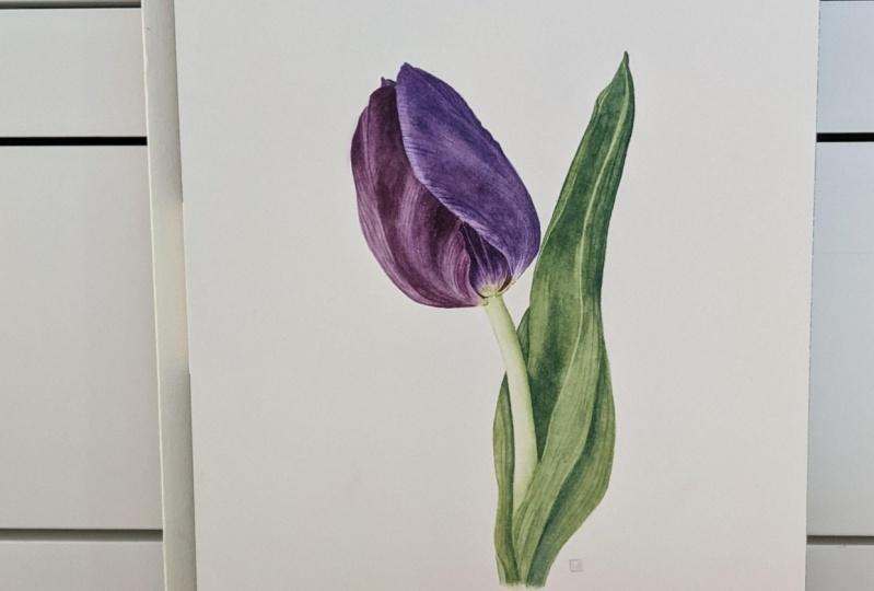 Watercolour Tulip