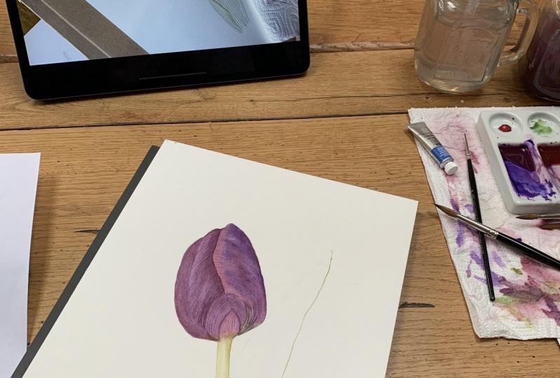 First tulip attempt