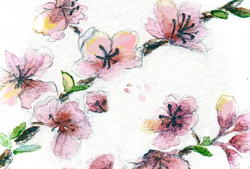 Cherry Blossoms !!