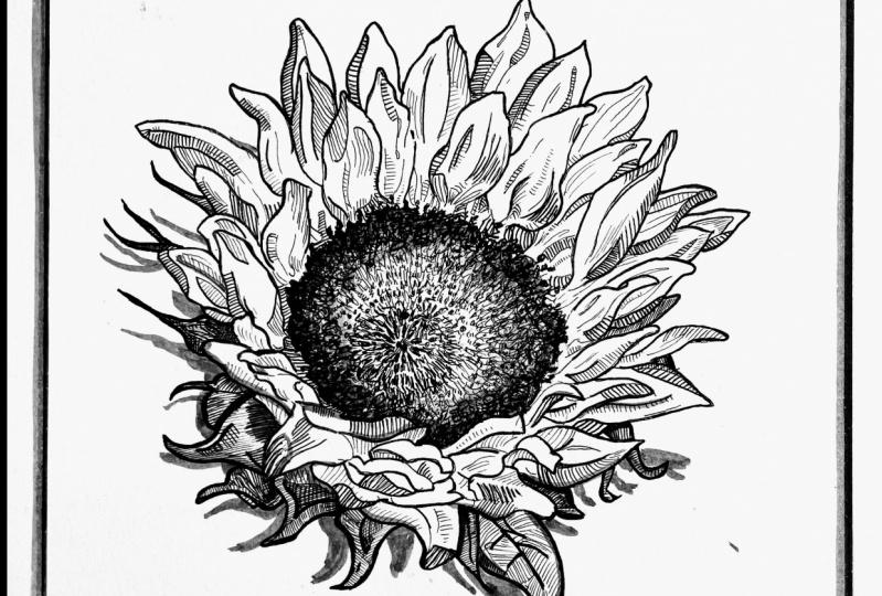 Magnolia, Sunflower, Rose