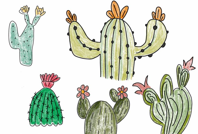 Cacti Fun