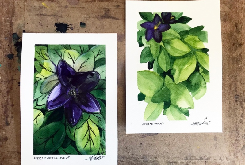 African Violet Still Life - Watercolour