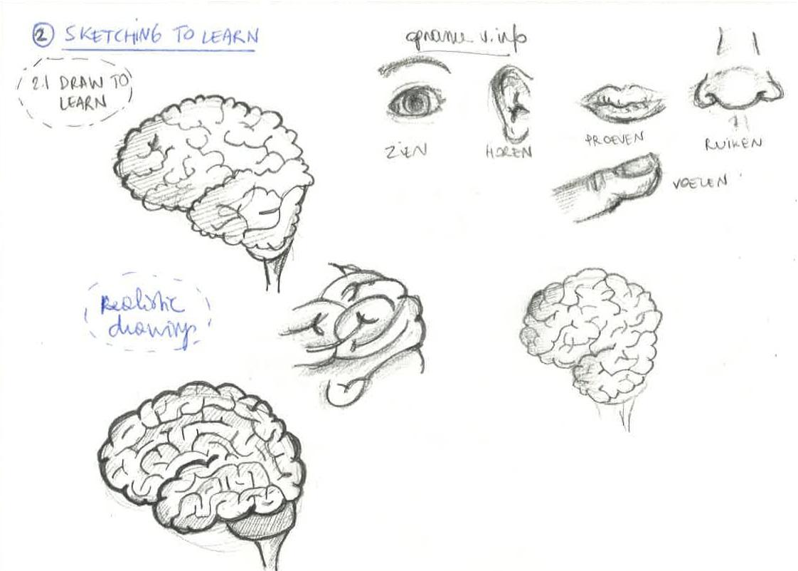 How the brain learns skillshare projects i had difficulties drawing the brain realistic it seems i keep falling back on my more cartoony style ccuart Image collections