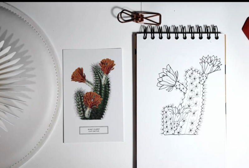 Project Cactus linedrawing Illustration