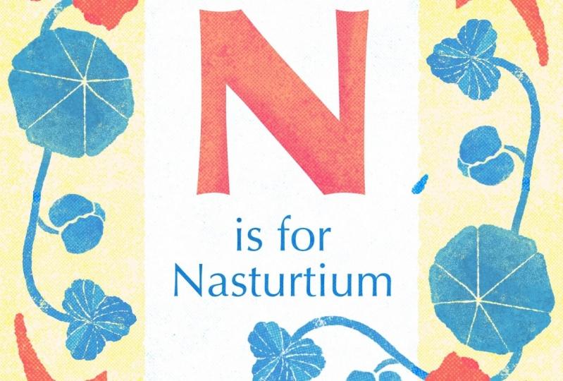 Nasturtiums (you can eat them!)