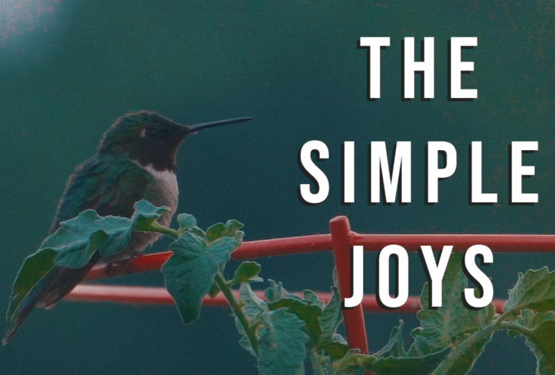 The Simple Joys of Hummingbirds - Documentary