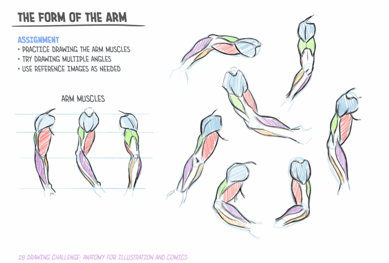 28-Day Drawing Challenge: Anatomy for Illustration and Comics