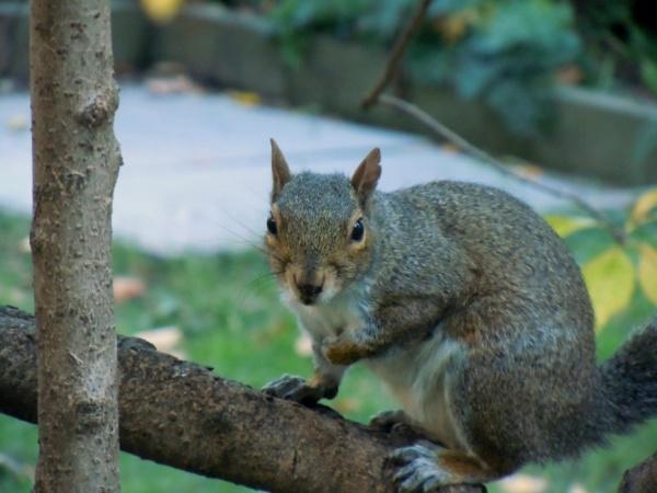 Climb of the Squirrels