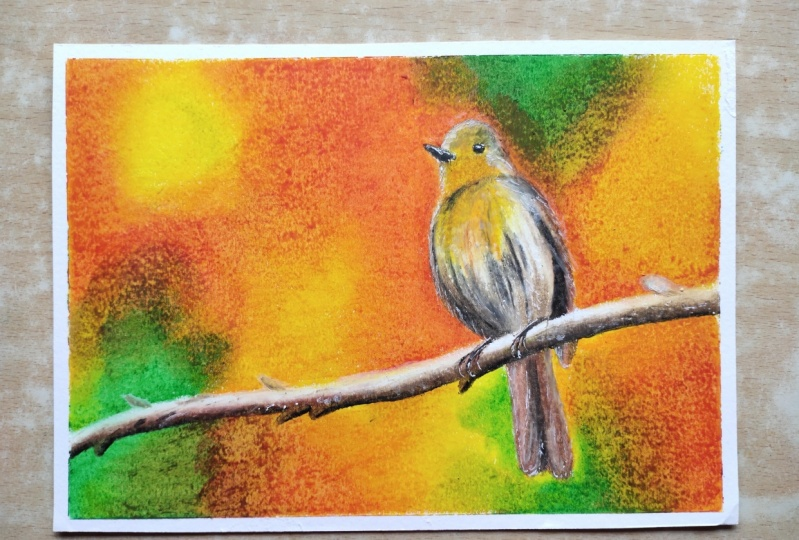 Realistic bird with oil pastels
