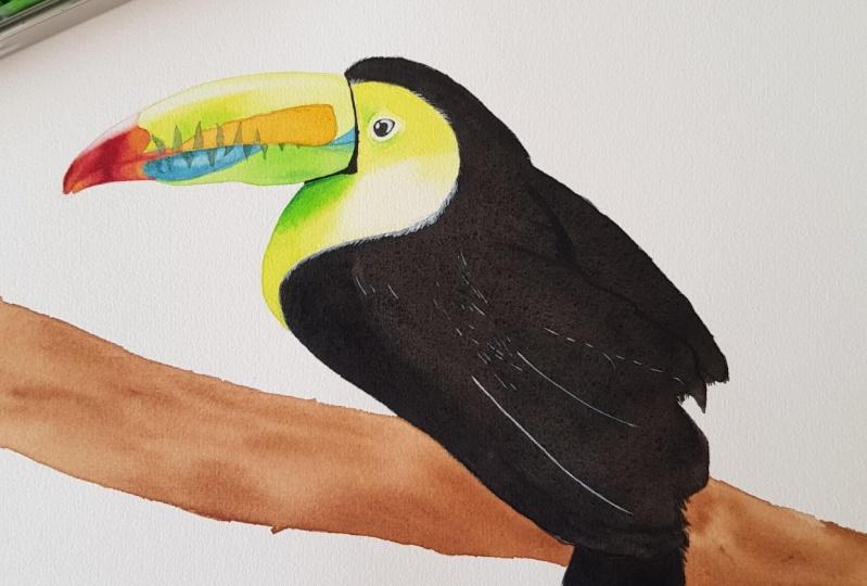 Toucan - colourful bird