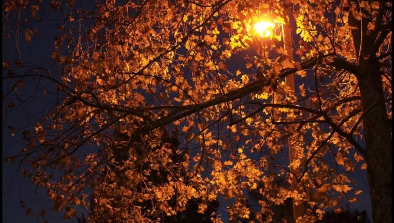 Flickering Streetlight. Rustling Leaves.