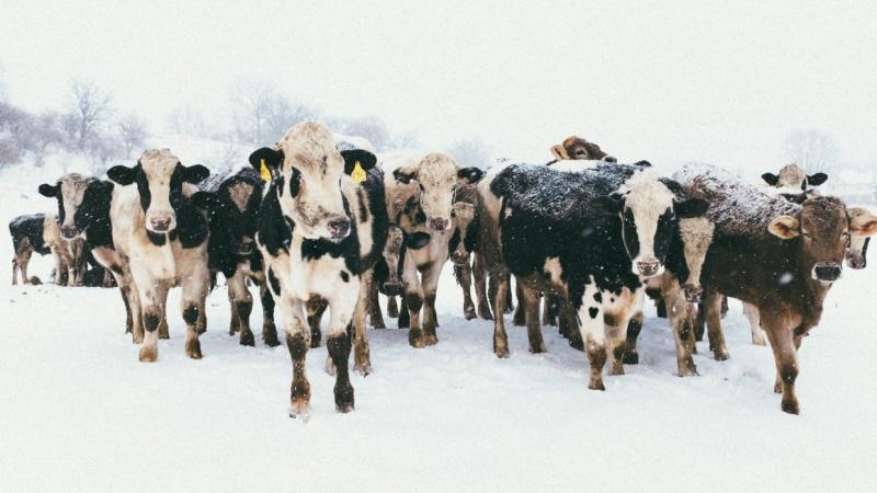 Driftless Wisconsin Blizzard