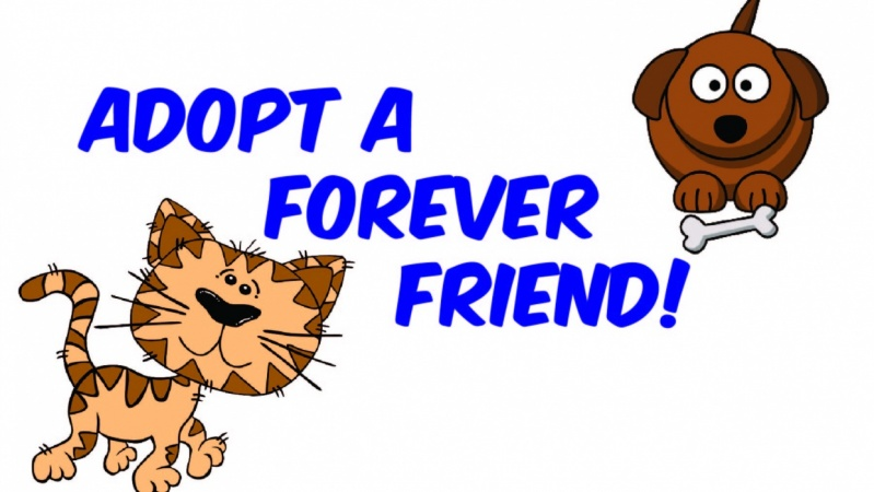 Adopt a Forever Friend!