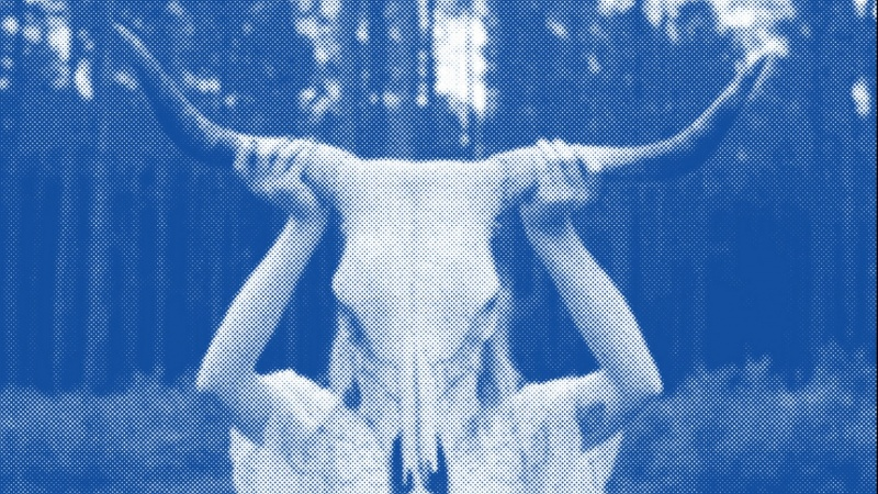 Girl with longhorn