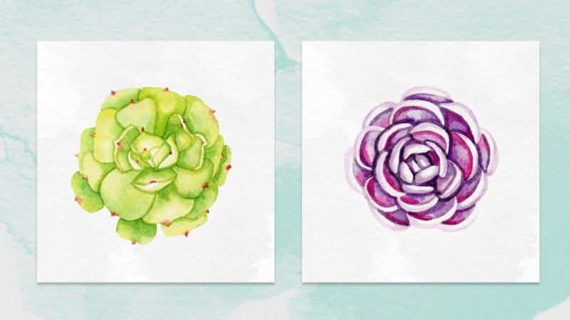 Watercolor Succulents Sample Project