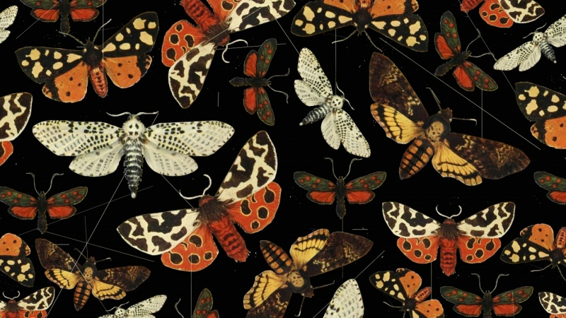Night butterfly pattern
