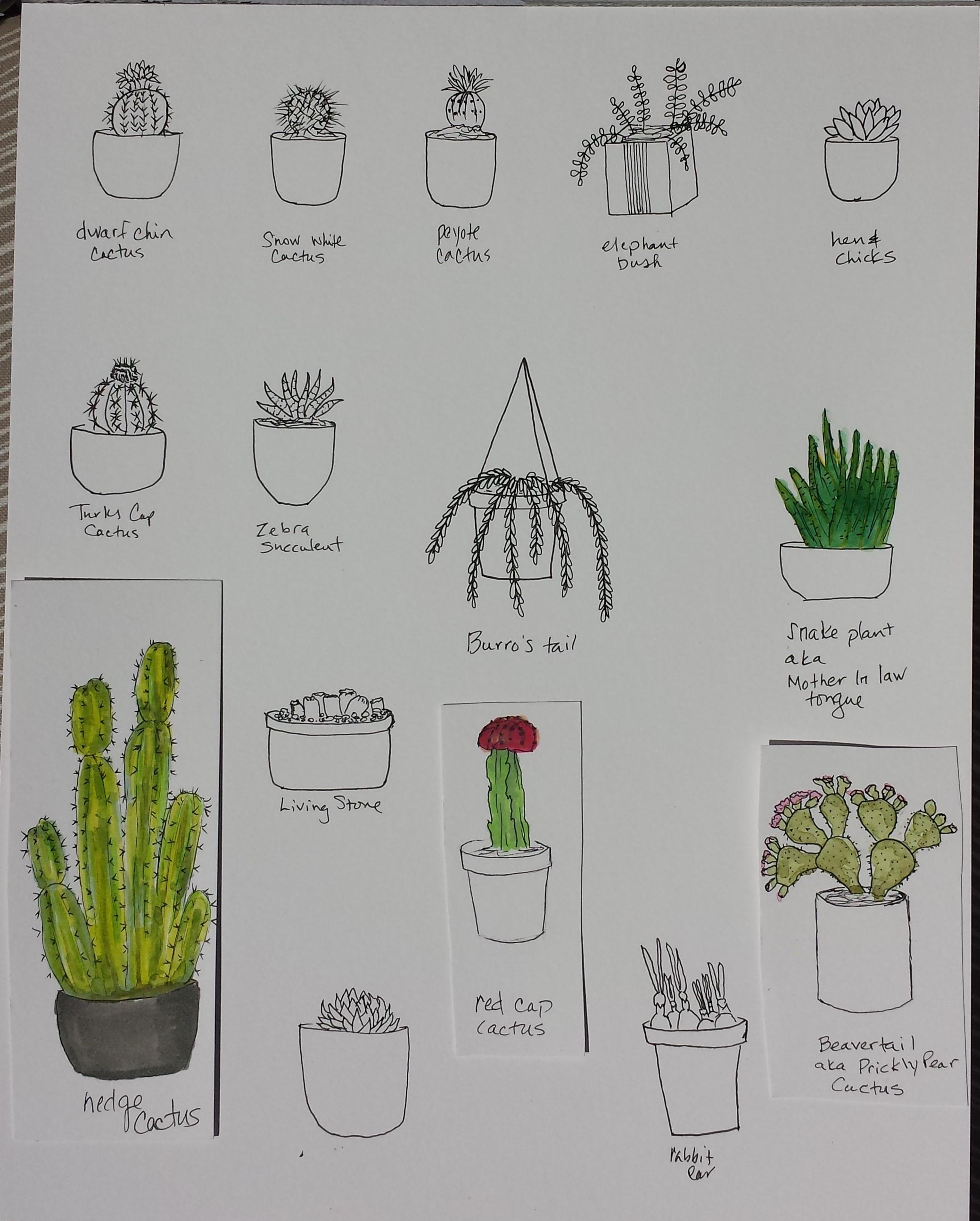 Drawing cactus | Skillshare Projects