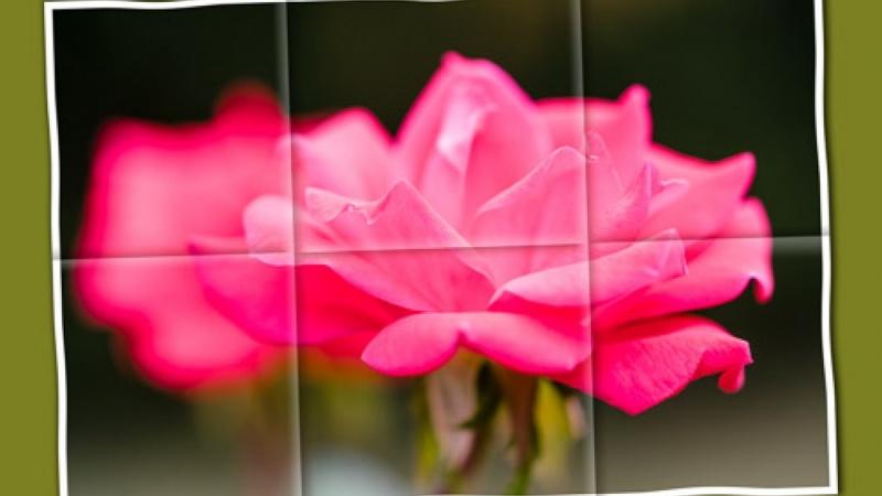 A Rose Keepsake