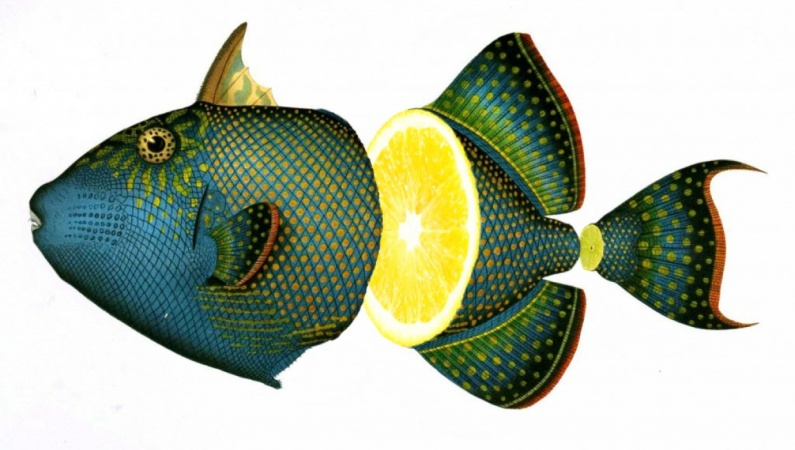 Photoshop: Fruity fish collage