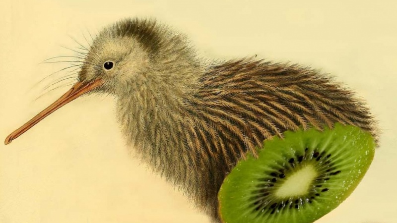 I cut a kiwi, but it was only kiwi inside...