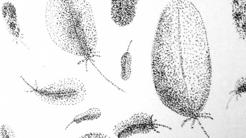 Shading with the Stippling Technique project