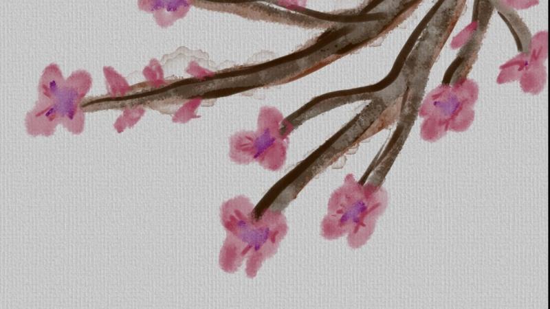 My Cherry Blossoms