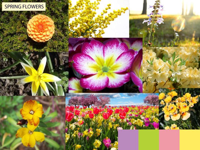 Beautiful spring flowers skillshare projects 9c625983 mightylinksfo