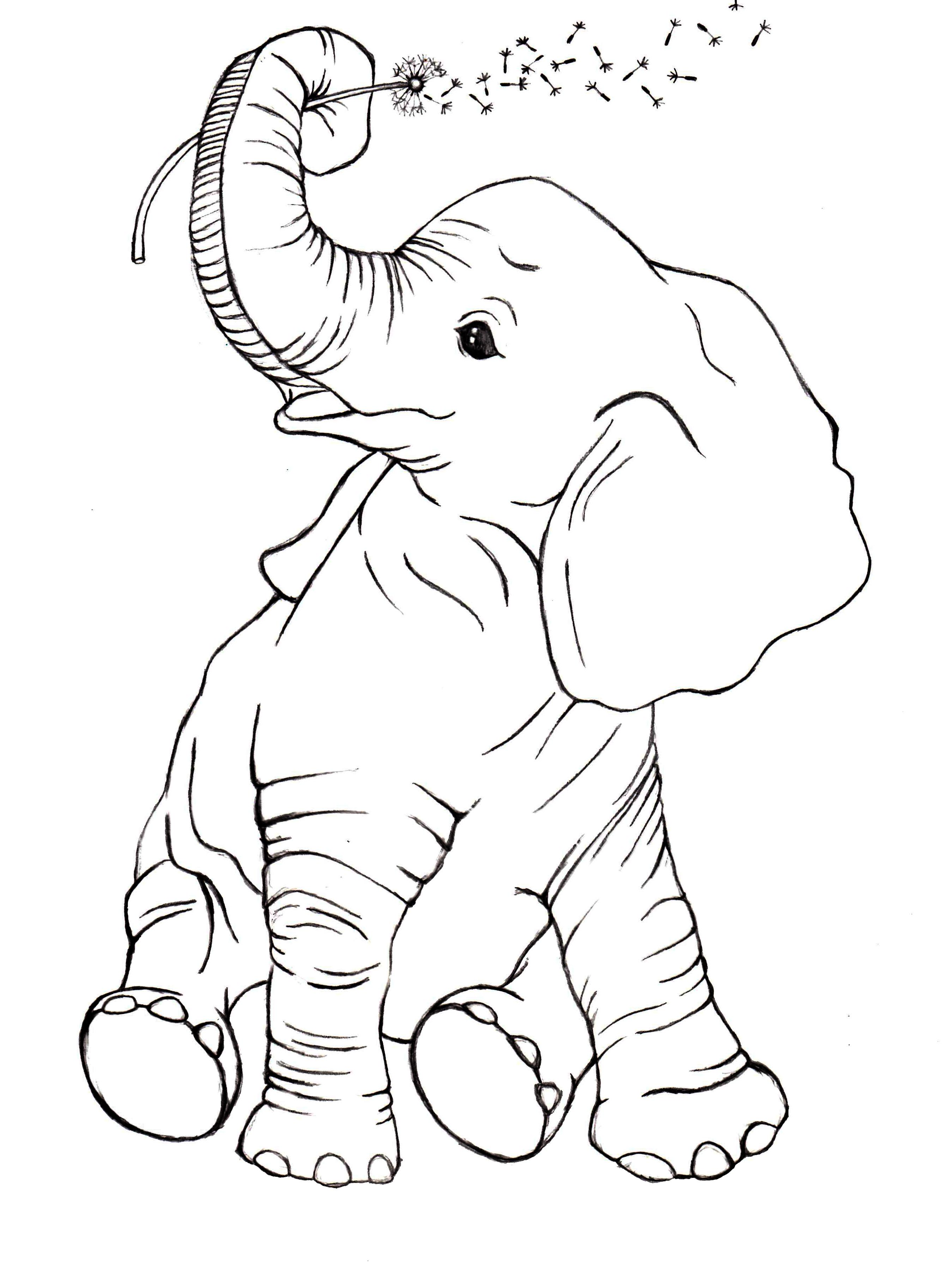 an elephant never forgets skillshare projects