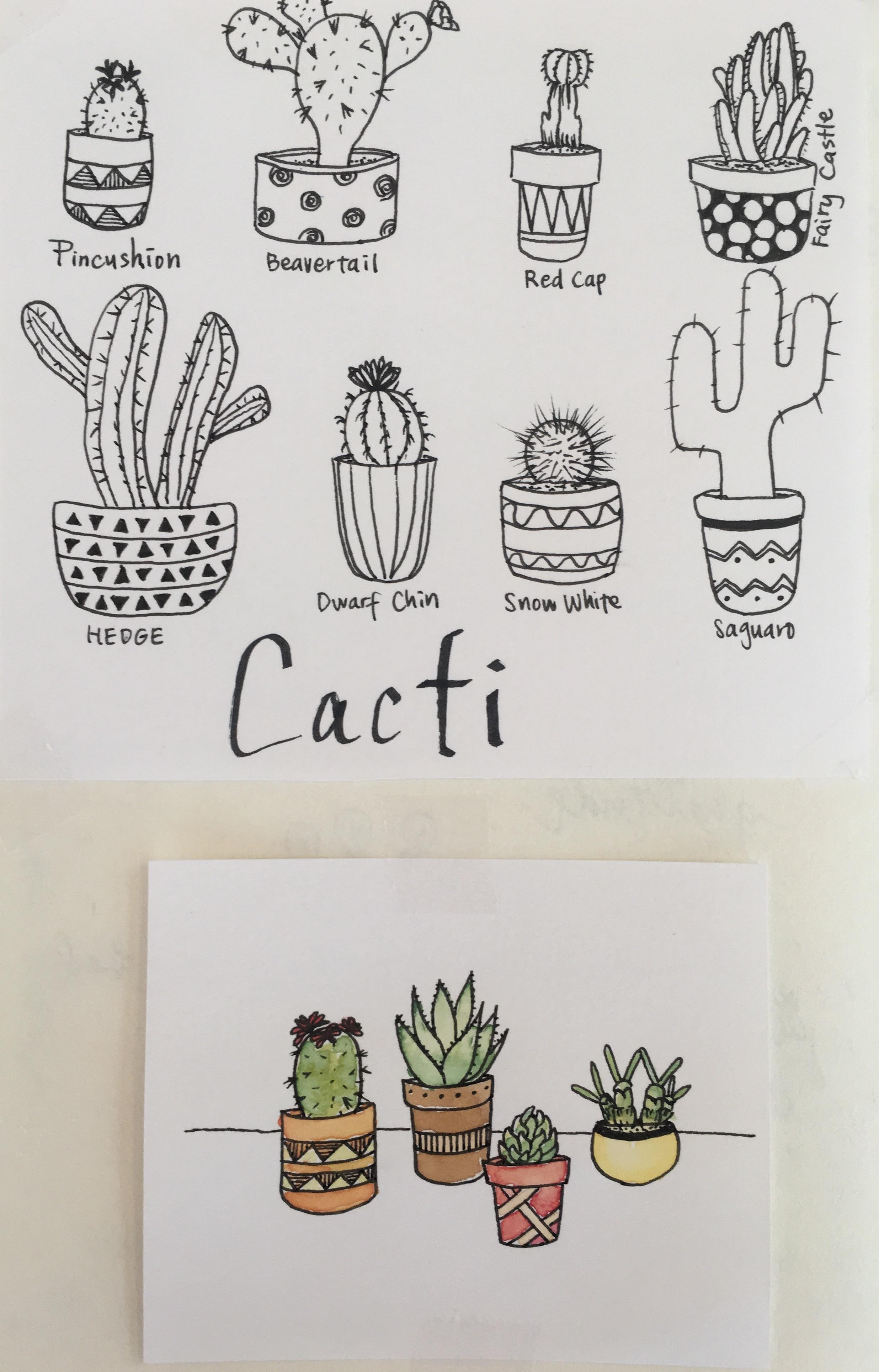 Cacti Succulents Line Drawing Project Skillshare Projects