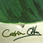 Catrin OHara