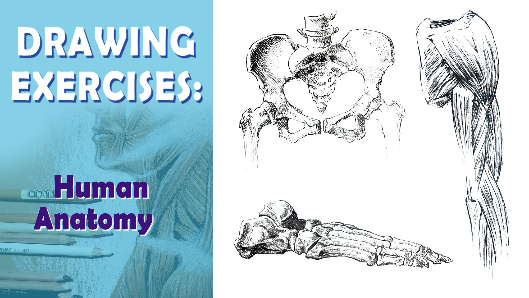 Drawing Exercises - How to draw human anatomy | Milan Glozić