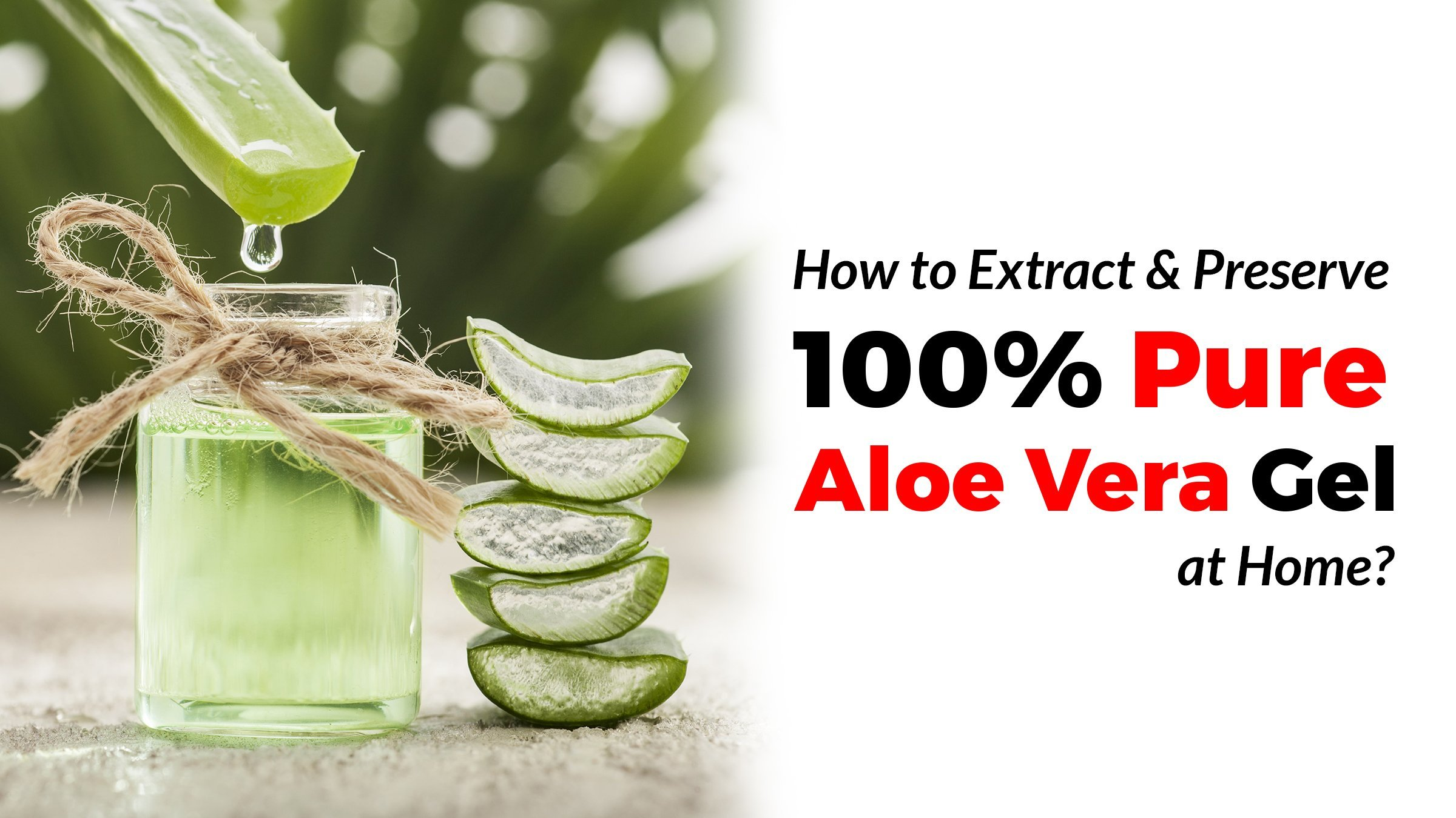 how to extract and preserve 100 pure aloe vera gel at. Black Bedroom Furniture Sets. Home Design Ideas