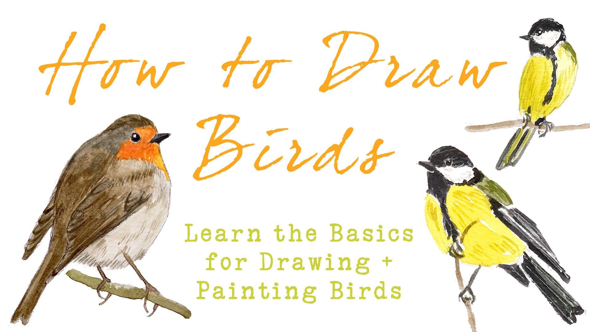 How to draw birds basic techniques for drawing painting birds julia bausenhardt skillshare