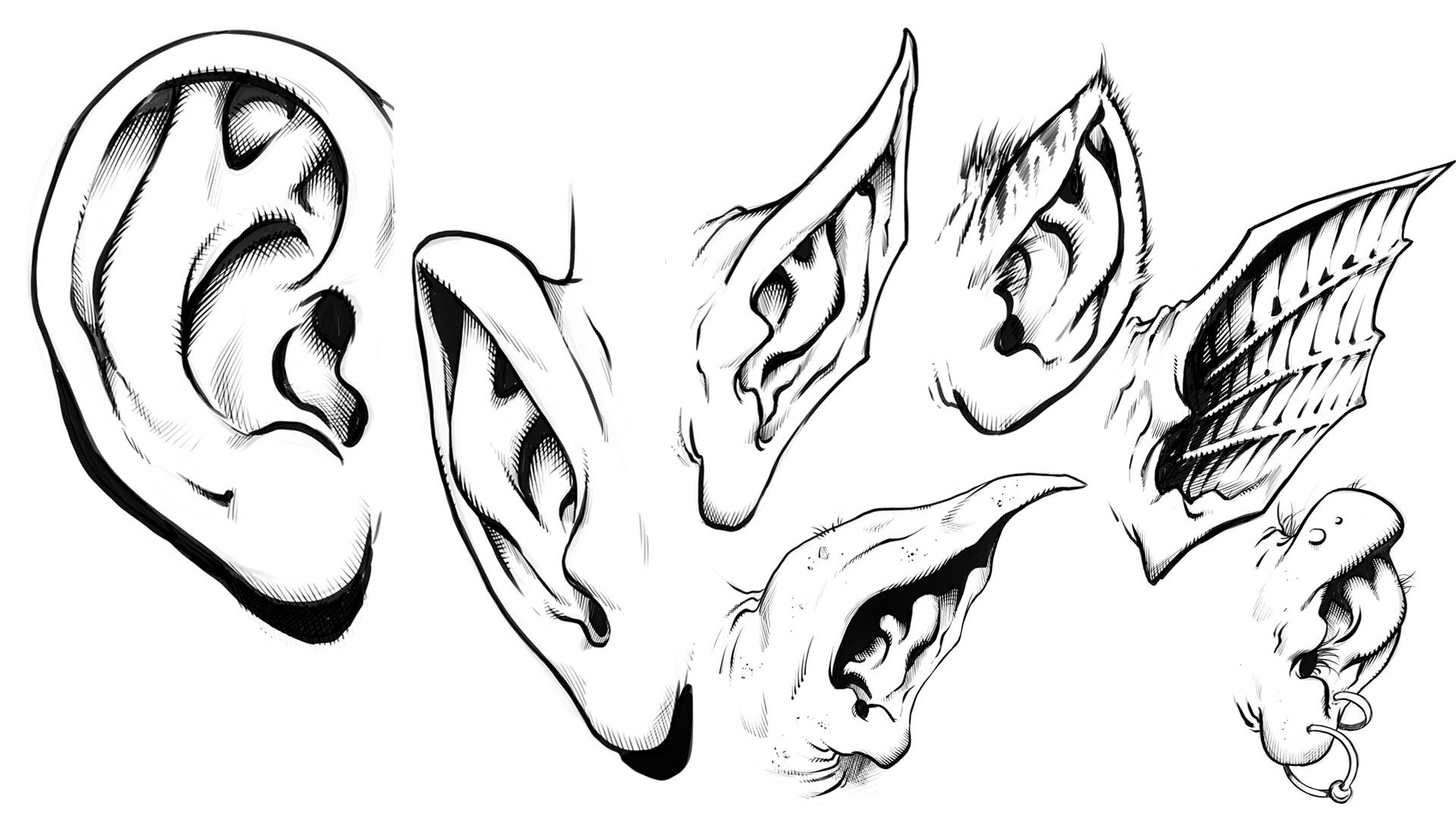 How To Draw The Ears