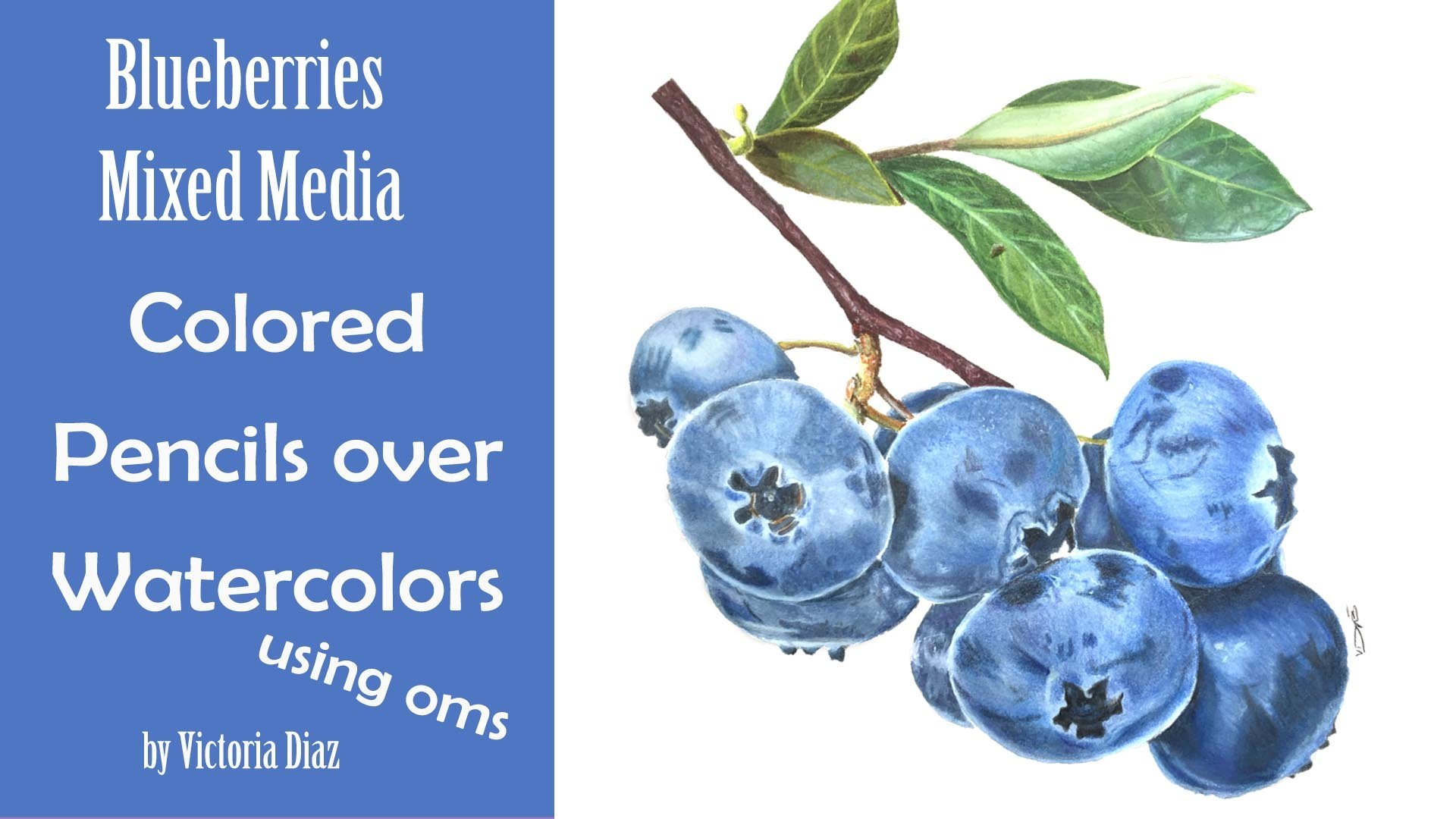 Botanical Painting Blueberries In Mixed Media Victoria Diaz Skillshare