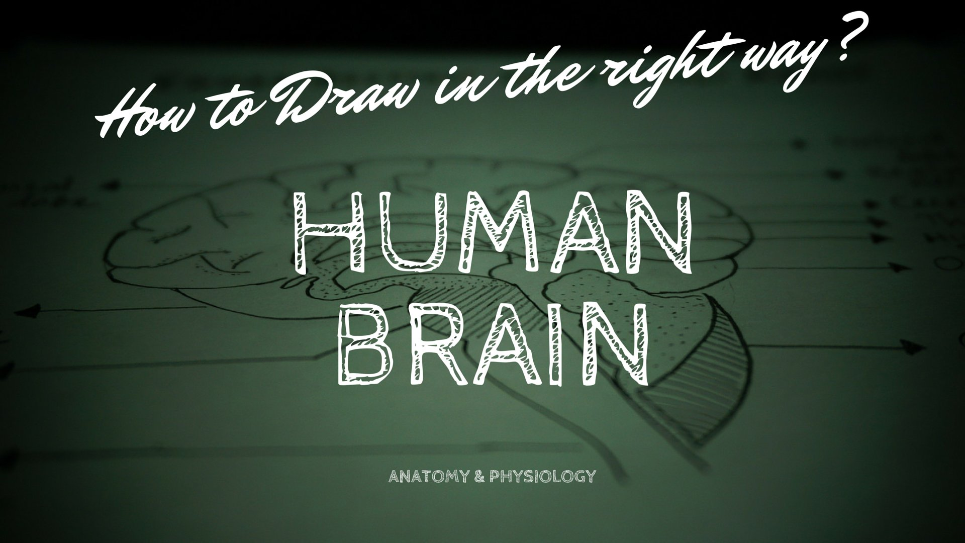 How To Draw Human Brain The Right Way In Just 5 Minutes Anatomy And